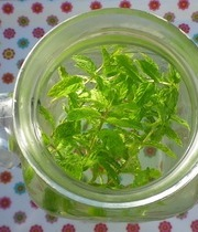 Mint flavored water