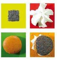 Macaron Butternut Chantilly de Brebis