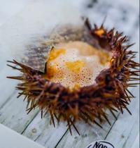 Oursin de Norvège , tagliatelles de céleri, poutargue d'oursin par Loïc Villemin