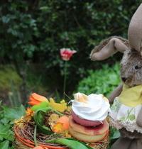 Rose de Pâques dans son jardin