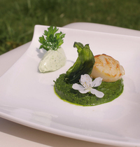 Scallops, herb velouté, lemon cream and frizzled herbs